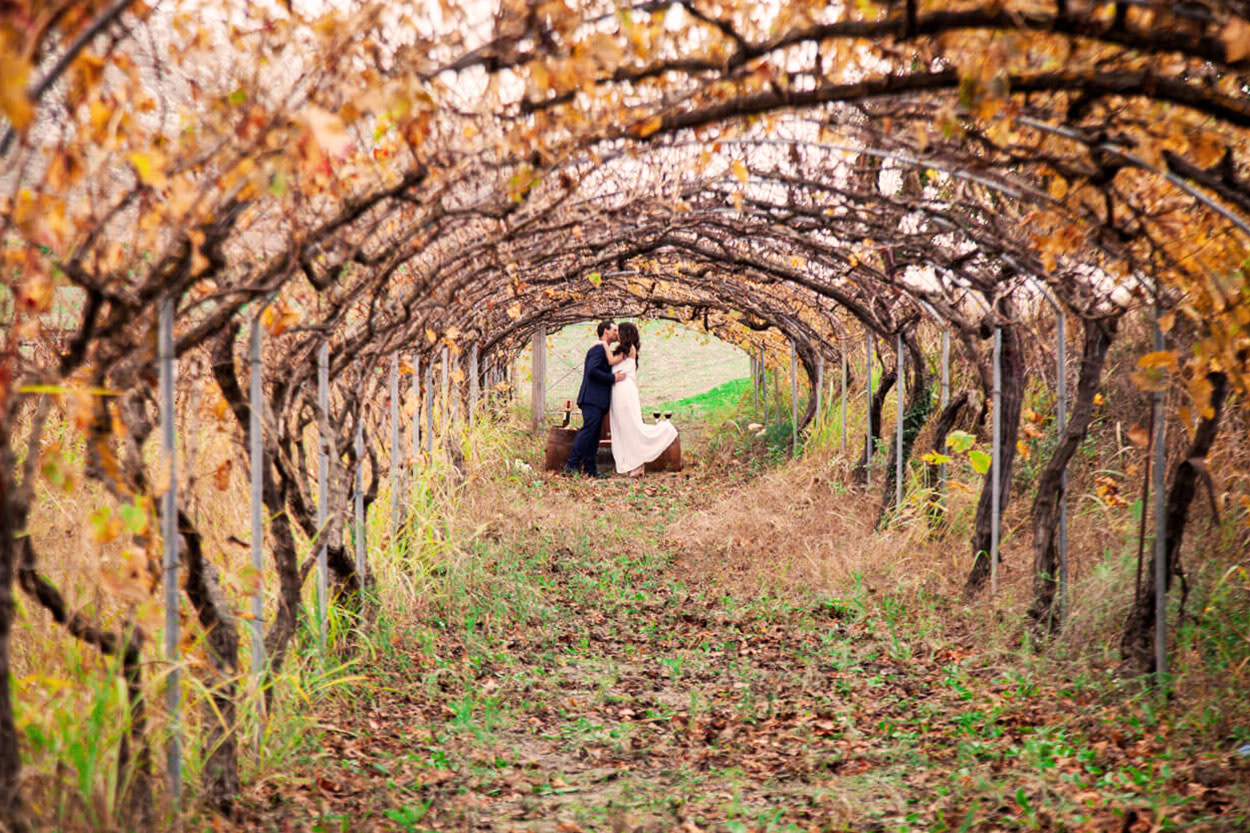 Wedding in a vineyard